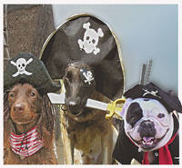 pirate dogs 3