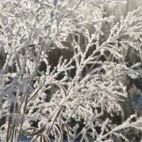 Frosted Grass by Roger Dullinger