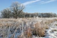 Frosted Marsh