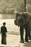Hats Off, Elephant Rescue Center,, Thailand