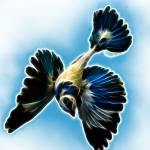 """Bird in Blue"" by jbjoani2"