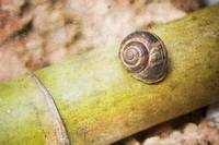 snail and bamboo