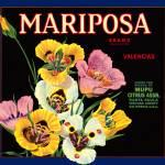 """Mariposa"" by dalidayna"