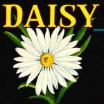 """""""Daisy"""" by dalidayna"""