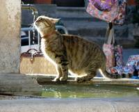 Cat at Fountain