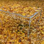 """Fall Tableau"" by jstill"