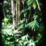 """""""bamboo"""" by wilsonkunjan"""