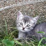"""""""Kitty - 2009"""" by lmpinkham"""