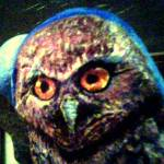 """Burrowing Owl"" by Lawnjockey"