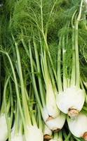 FabulousFennel