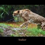 """Stalker"" by JCPics"