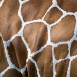 """Giraffe"" by kretyen"