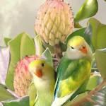 """Lovebirds in Magnolia Tree"" by spadecaller"