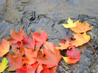 River water Bright Autumn Leaves art prints