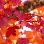 """""""Autumn Forest Tree Leaves Red Orange"""" by BasleeTroutman"""