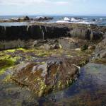 """Tasmanian rock pool"" by kabe"