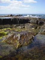 Tasmanian rock pool