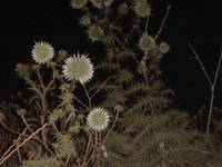 Flowers At Night