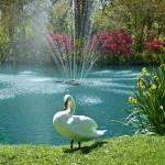 """""""Swan 2"""" by kpitre"""