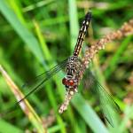 """Dragonfly Close-Up"" by feagans_photography"