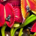 """flytrap"" by BoDillard"