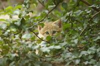 Kitten in the bush