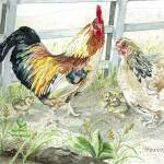 """Rooster, Hen & Chicks"" by ClotheslineArt"