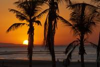 Silhouetted Palm Trees at Sunset