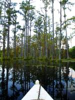 Paddeling Through Cypress Gardens Swamp