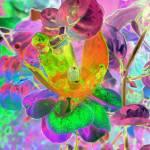 """Fuchsia 1"" by bydesign"