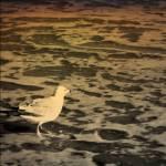 """""""Gull"""" by aviaperture"""