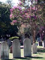 Charleston South Carolina Graves
