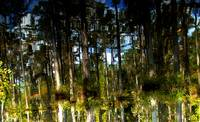 Swamp Reflections and Mind Games