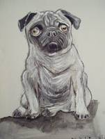 Pug Sitting 11x14 Pet Portrait