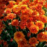 """Beautiful Mums"" by MHP-Photography"