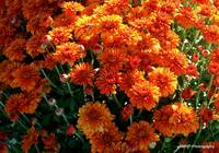 Beautiful Mums