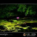 """nostalgic- raj arts photography"" by rajartworks"