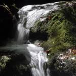 """Moss, Rock, Stream"" by maryfrances2374"