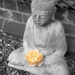 """Buddah and Rose"" by Gerard"