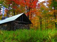 Sugar Shack and Foliage