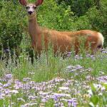 """""""Deer in Flowers"""" by maj"""
