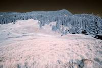 Mountain Meadow in InfraRed