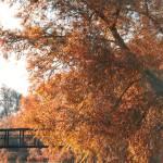 """""""Autumn in Mildenhall 2"""" by georgefairbairnphotograph"""