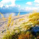 """Indian Pass_St. Vincent Island Sea Oats II"" by Cynthia_Burkhardt"