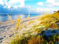 Indian Pass_St. Vincent Island Sea Oats II