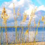 """Indian Pass_St. Vincent Island Sea Oats V"" by Cynthia_Burkhardt"