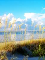Indian Pass_St. Vincent Island Sea Oats VII