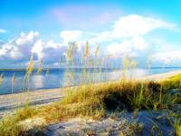Indian Pass_St. Vincent Island Sea Oats VIII