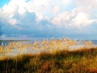 Indian Pass_St. Vincent Island Sea Oats I