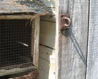 Old door with hasp and old rabbit hutch